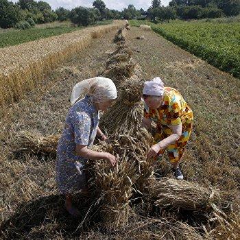 Уборка пшеницы в Белоруссии