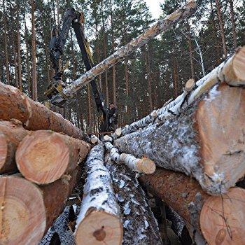Предприятие по заготовке и переработке древесины Кыштымский лес в Челябинской области