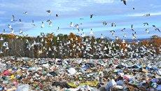 Сортировка и утилизация бытовых отходов в Челябинской области