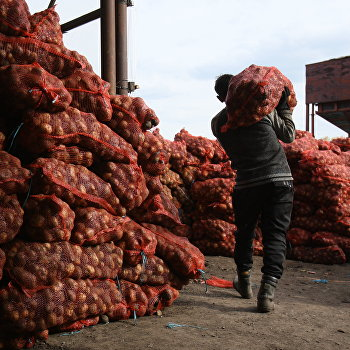 Уборка картофеля в Новосибирской области