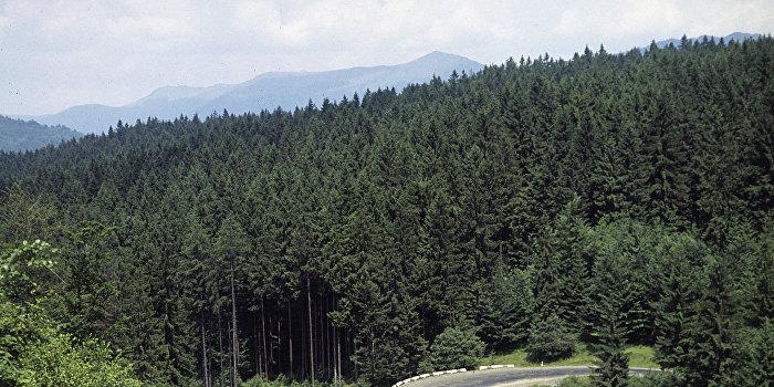 В горах Закарпатья
