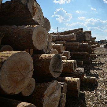 Лес в Новосибирской области