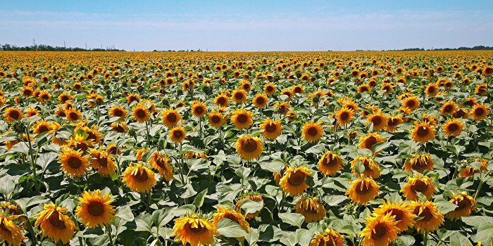 Битва за урожай: криминальные банды грабят поля «аграрной сверхдержавы»