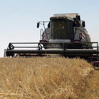Уборка зерновых в ДНР