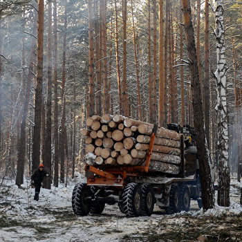 Заготовка леса на лесохозяйственном участке в Алтайском крае