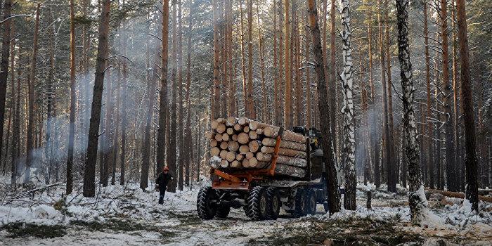 «Укрпромвнешэкспертиза»: Лесозаготовка и деревообработка Украины ушли в тень