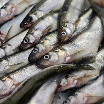 Открытие фестиваля Рыбная неделя