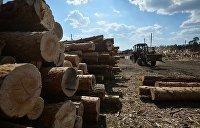 Кругляк не пройдет: Порошенко выступил за учет древесины