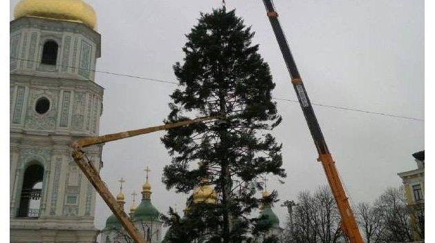 СМИ узнали, почему вКиеве установили лысую елку