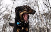 Луценко и Черчилль: Собачий вальс генпрокурора Украины вызвал ажиотаж в сети