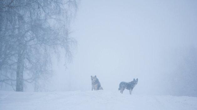Коммунальный коллапс: Черкассы остались без света и рискуют замерзнуть