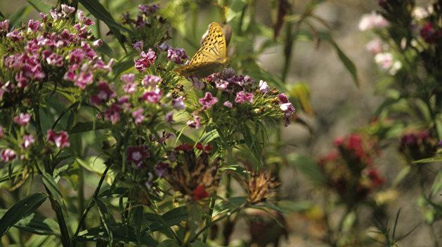 Полет шмеля: Украина отправляет за кордон пчел, пауков и мотыльков