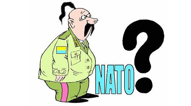 НАТО подтверждает: Встречи с министром обороны Украины не будет