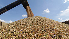 «Взгляд»: Россия бьет и Европу, и США на мировом рынке зерна