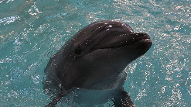 В Крыму рассказали о судьбе украинских боевых дельфинов